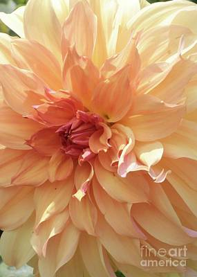 Photograph - Orange Sherbert Dahlia by Carol Groenen