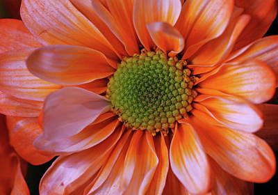 Photograph - Orange Sherbet by Judy Vincent
