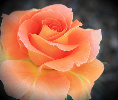 Art Print featuring the photograph Orange Sherbert by Marna Edwards Flavell