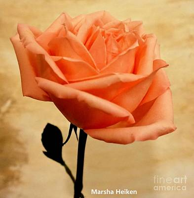Mixed Media - Orange Sherbert Rose by Marsha Heiken