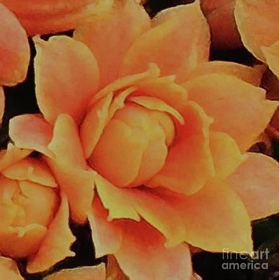 Photograph - Orange Sherbet Begonia by Hazel Holland