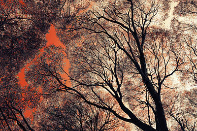 Photograph - Orange Sky. Airy Lace Of Autumn by Jenny Rainbow