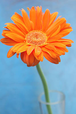 Focus On Foreground Photograph - Orange Slanted Gerbera by Photography by Gordana Adamovic Mladenovic