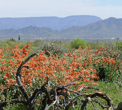 Photograph - Orange Spring In The Desert by Laurel Powell