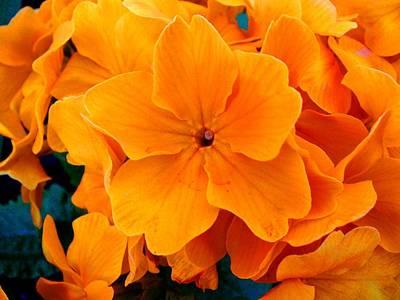 Photograph - Orange Spring by Roberto Alamino