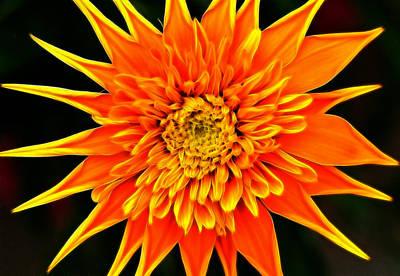Orange Star Flower Original by Bill Morgenstern
