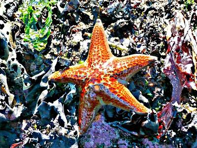 Photograph - Orange Starfish by 'REA' Gallery
