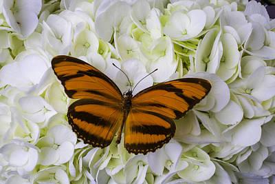 Orange Striped Butterfly Print by Garry Gay