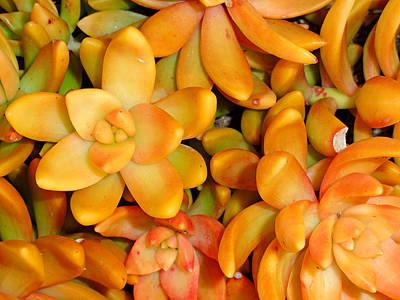 Photograph - Orange Succulents by Robert Meyers-Lussier