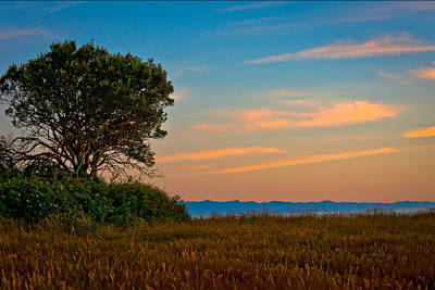 Photograph - Orange Sunset With Tree by Johnny Sandaire