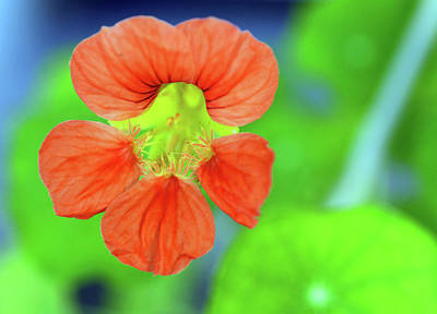 Photograph - Orange Surprise by Wanda Brandon