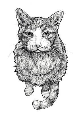Orange Tabby Drawing - Orange Tabby Cat by Callan Rogers-Grazado