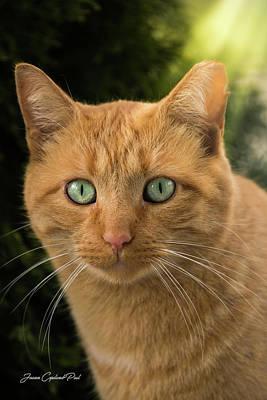 Photograph - Orange Tabby Cat by Joann Copeland-Paul