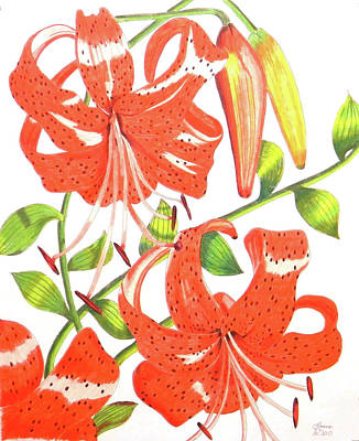 Primitive Drawing - Orange Tiger Lilies by Laura Wilson