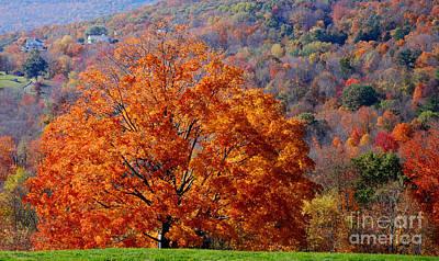 Warren Connecticut Photograph - Orange Tree by Andrea Simon