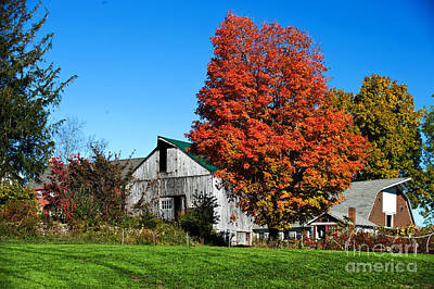 Fall Scenes Photograph - Orange Tree By The Barn by Jim  Calarese