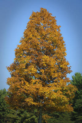 3 October Photograph - Orange Tree Pipestem Short Course by Teresa Mucha