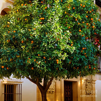 Andalucia Photograph - Orange Tree Spain by Lutz Baar