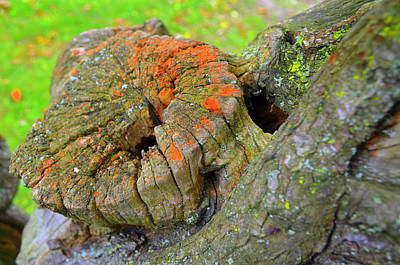 Orange Tree Stump Art Print
