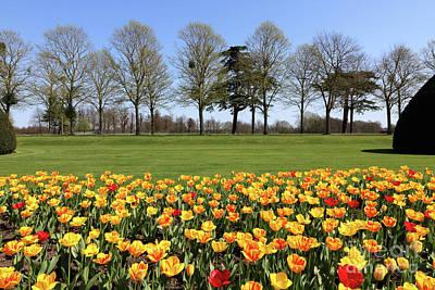 Photograph - Orange Tulips At Hampton Court by Julia Gavin