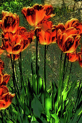 Photograph - Orange Tulips by David Patterson
