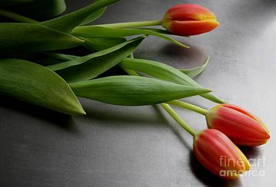 Photograph - Orange Tulips by Mary-Lee Sanders