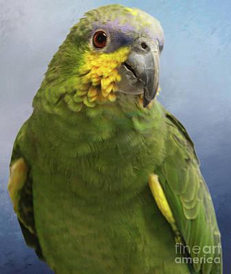 Orange Wing Amazon Parrot Art Print