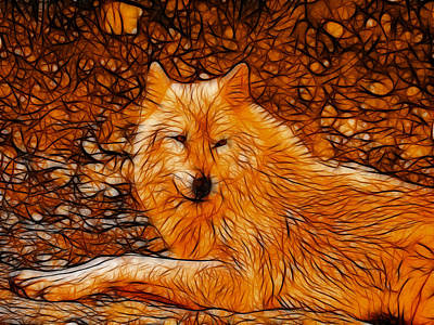 Photograph - Orange Wolf by Sandy Keeton