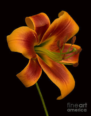 Orange Wonder Print by Robert Pilkington