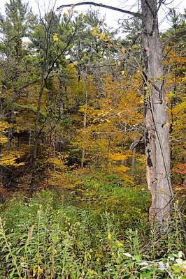 Photograph - Orange Woods by Bonfire Photography