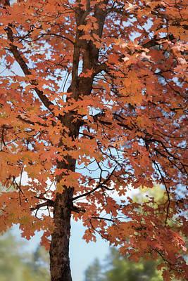 Photograph - Orange Ya Beautiful by Saija Lehtonen