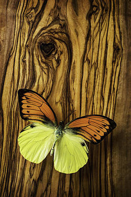 Orange Yellow Butterfly Art Print