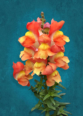 Photograph - Orange Yellow Snapdragon Flowers by Debi Dalio