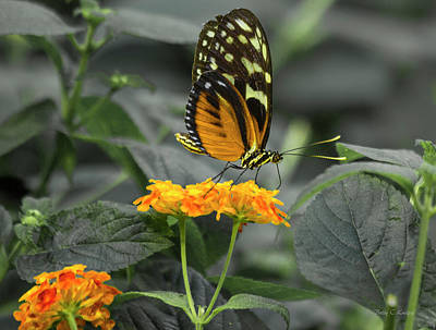 Butterfly Garden Photograph - Orange You Beautiful by Betsy Knapp