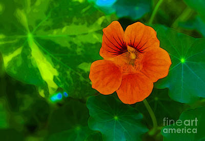 Photograph - Orange You Lovely by Julie Lueders