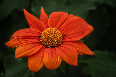 Photograph - Orange You Pretty by Dick Pratt