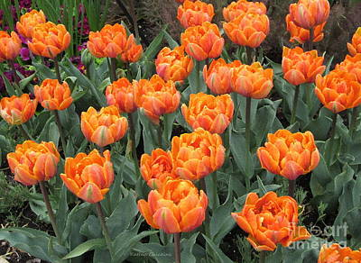 Photograph - Orange You Pretty? by Kathie Chicoine