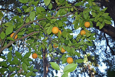 Photograph - Oranges And Sky by Aimee L Maher Photography and Art Visit ALMGallerydotcom