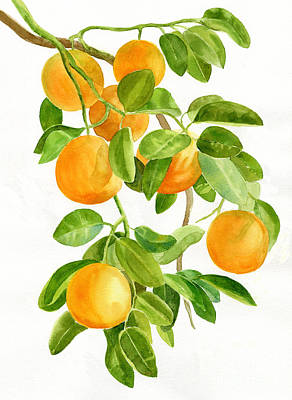 Tropical Fruit Painting - Oranges On A Branch by Sharon Freeman