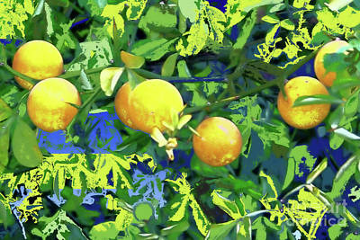 Photograph - Oranges On Vine IIi by Shirley Moravec