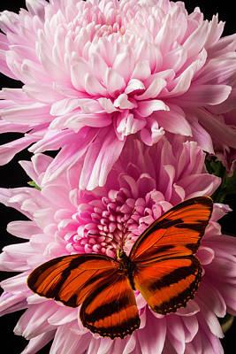 Oranges Wings On Pink Mum Art Print by Garry Gay