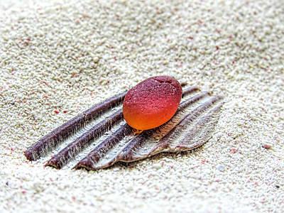 Photograph - Orangey Red by Janice Drew