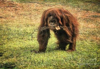 Photograph - Orangutan 1 by Kristalin Davis