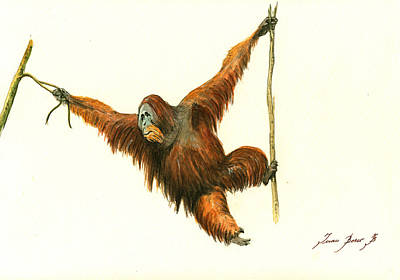 Monkey Wall Art - Painting - Orangutan by Juan Bosco