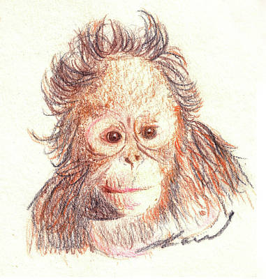 Pastel Drawing Drawing - Orangutan by Julie L Hoddinott