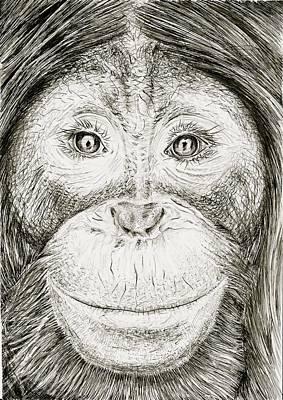 Orangutan Drawing - Orangutan by Kate Evans