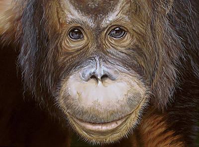 Painting - Orangutan by Katie McConnachie