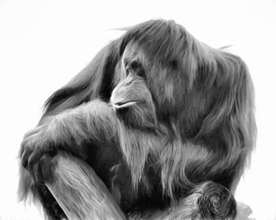 Photograph - Orangutan by Lana Trussell
