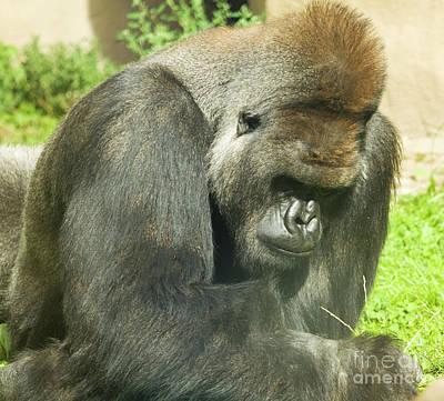 Photograph - Orangutan Pongo Pygmaeus by Irina Afonskaya