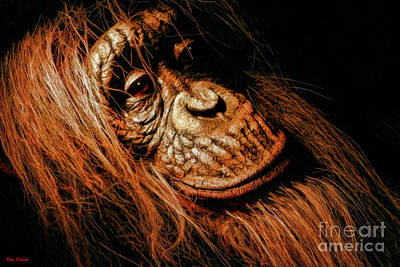 Photograph - Orangutan Portiort by Blake Richards